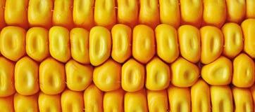 Maíz del maíz ceral Fotografía de archivo libre de regalías