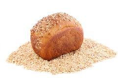 Maíz del pan Fotos de archivo libres de regalías