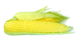 Maíz dos, maíz Fotografía de archivo libre de regalías