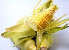 Maíz en la mazorca amarillo delicioso del verano Imágenes de archivo libres de regalías