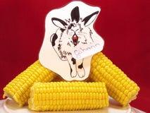 Maíz en la mazorca con imagen divertida de una liebre. Fotos de archivo libres de regalías