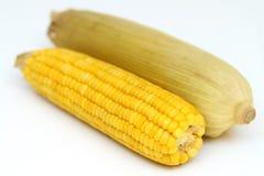 Mazorca de maíz hervida dos con las hojas amarillas Imagenes de archivo