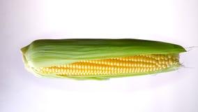 maíz horizontalmente de giro en el fondo blanco metrajes