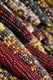 Maíz indio #1 fotografía de archivo libre de regalías