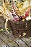Maíz indio americano en una cesta Fotografía de archivo