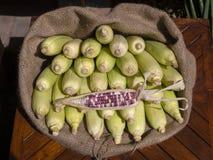Maíz orgánico, fresco, dulce para la venta en un mercado local en Bali, Indonesia de los granjeros Foto de archivo