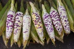 Maíz orgánico, fresco, dulce para la venta en un mercado local de los granjeros en Tailandia Imagenes de archivo