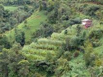 Maíz Paddy Fields en una cuesta de montaña verde Imágenes de archivo libres de regalías