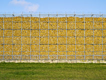 Maíz, pared, amarillo, natural, memoria Fotografía de archivo libre de regalías