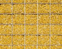 Maíz, pared, amarillo, natural, memoria Fotos de archivo libres de regalías