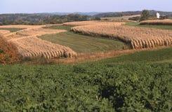 Maíz y alfalfa Wisconsin Imágenes de archivo libres de regalías