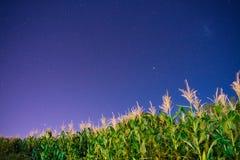 Maíz y estrellas adentro a una noche con el universo fotos de archivo