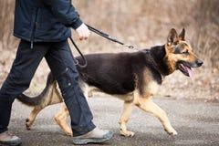 Maître et son chien obéissant Photos stock