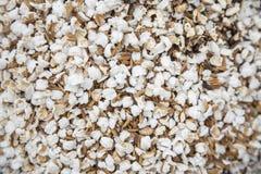 Maïs éclaté thaïlandais de riz Image stock