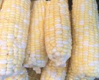 Maïs écossé Photographie stock