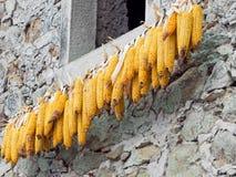 Maïs, épis de maïs doux accrochant pour sécher au soleil photo stock