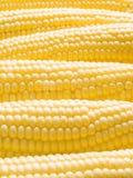 Maïs. Image stock
