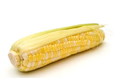 Maïs. Stock Foto's