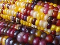 Maïs stock fotografie
