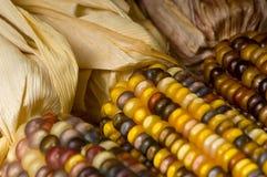 Maïs Stock Foto