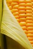 Maïs Images stock