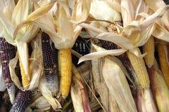 maïs Royalty-vrije Stock Foto's