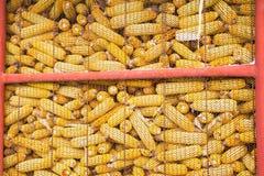 Maïs photo stock