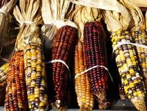 Maïs assorti Photos stock