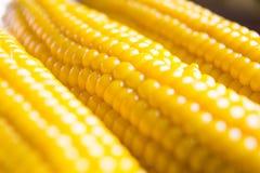Maïs au foyer mou Image libre de droits