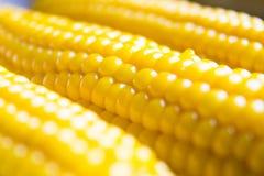 Maïs au foyer mou Photo libre de droits