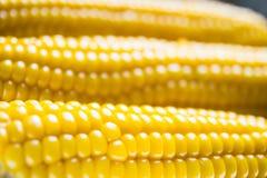 Maïs au foyer mou Photos libres de droits