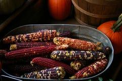 Maïs au temps de récolte Photographie stock libre de droits
