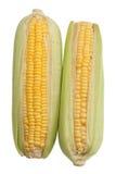 Maïs avec des gouttelettes d'eau sur le fond blanc Photographie stock libre de droits