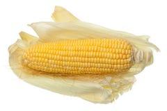 Maïs avec des gouttelettes d'eau sur le fond blanc Images libres de droits
