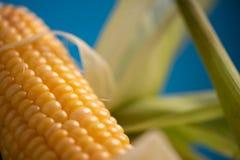Maïs avec haut étroit de feuilles Images stock