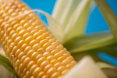 Maïs avec haut étroit de feuilles Photo stock
