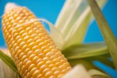 Maïs avec haut étroit de feuilles Photo libre de droits