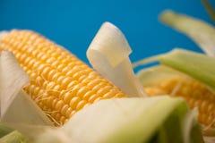 Maïs avec haut étroit de feuilles Photographie stock libre de droits