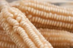 Maïs blanc Photographie stock libre de droits