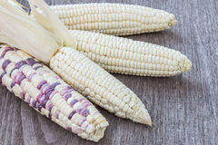 Maïs blanc Photo stock