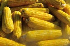 Maïs bouillant Photographie stock