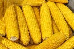 maïs bouilli Images libres de droits