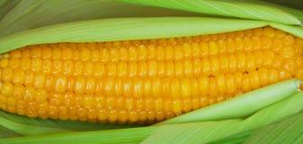 Maïs bouilli dans la peau Photo stock