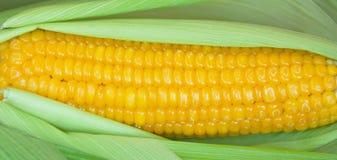 Maïs bouilli dans la peau Image stock
