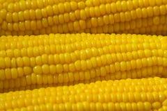 Maïs bouilli savoureux sur un tournesol de plat - macro Photographie stock