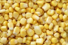 maïs conservé Image libre de droits