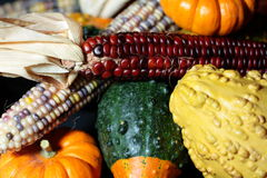 Maïs, courges, et potirons Images stock