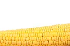 Maïs cru Photographie stock
