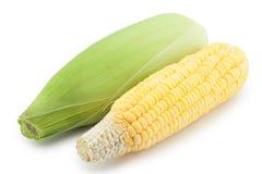 Maïs cru Photo stock