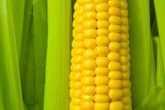maïs d'épi Photo stock